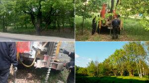 """140 drzew na Białołęce pod topór? """"Przykład dzikiej deweloperki"""""""