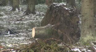 """""""Trzeba pamiętać, że lasy i parowanie z aparatów szparkowych drzew reguluje cykl opadów"""""""