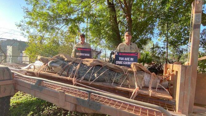 350 kilogramów, ponad cztery metry długości. Złapali potężnego krokodyla